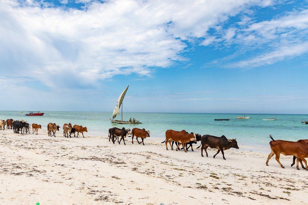 Zanzibar-daleke-destinacije
